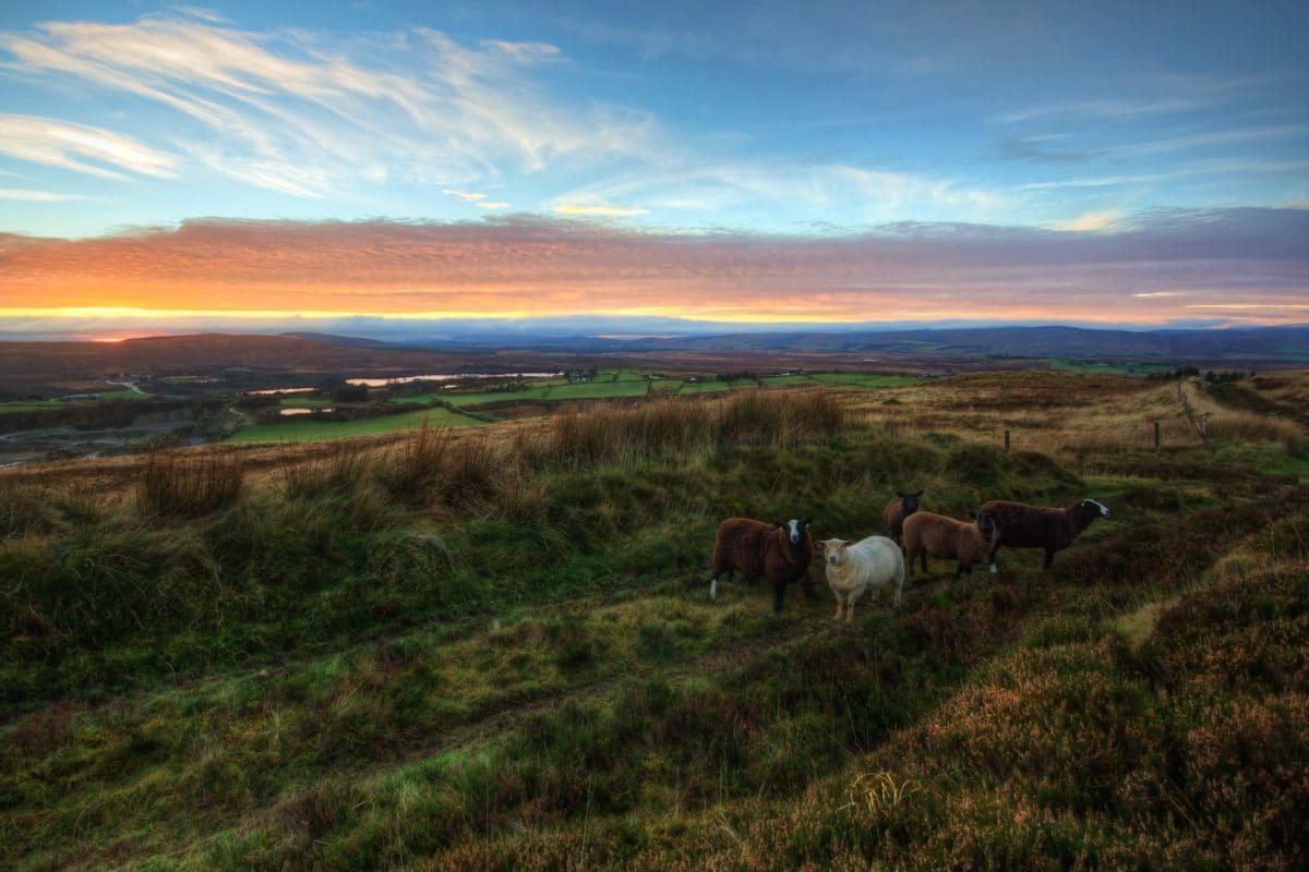 séjour-linguistique-irlande-paysages
